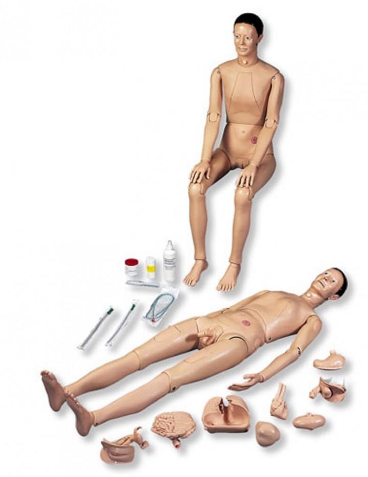 Figuras del Cuerpo Humano